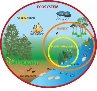 ecosystem services   earthwatch freshwater watchdiagram of an ecosystem