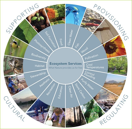Ecosystem services diagram