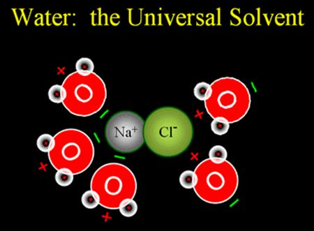 water as a universal solvent The most essential component for every living organism it is estimated that human body contains about 65% of water while some plants possess about 95% water it is.